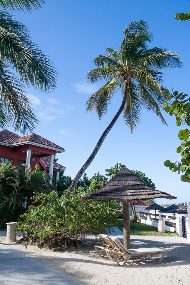 Antigua2014-1082